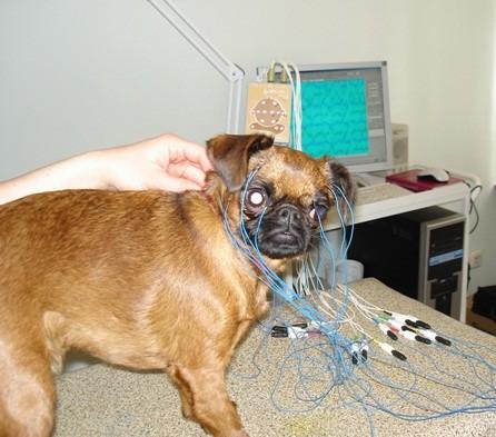 You are currently viewing ЭЭГ применение в ветеринарной практике