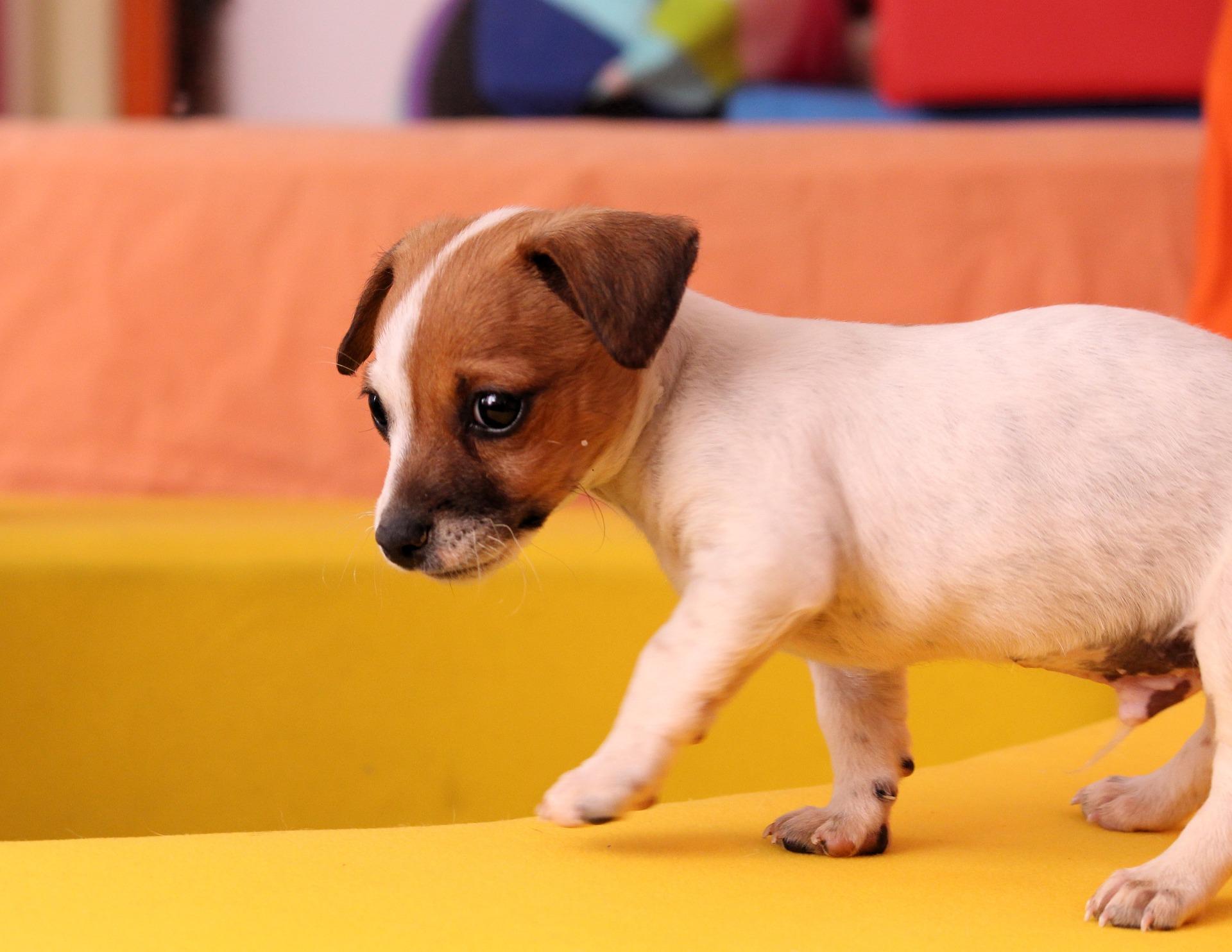 Физиотерапия при травмах позвоночника у собак и кошек