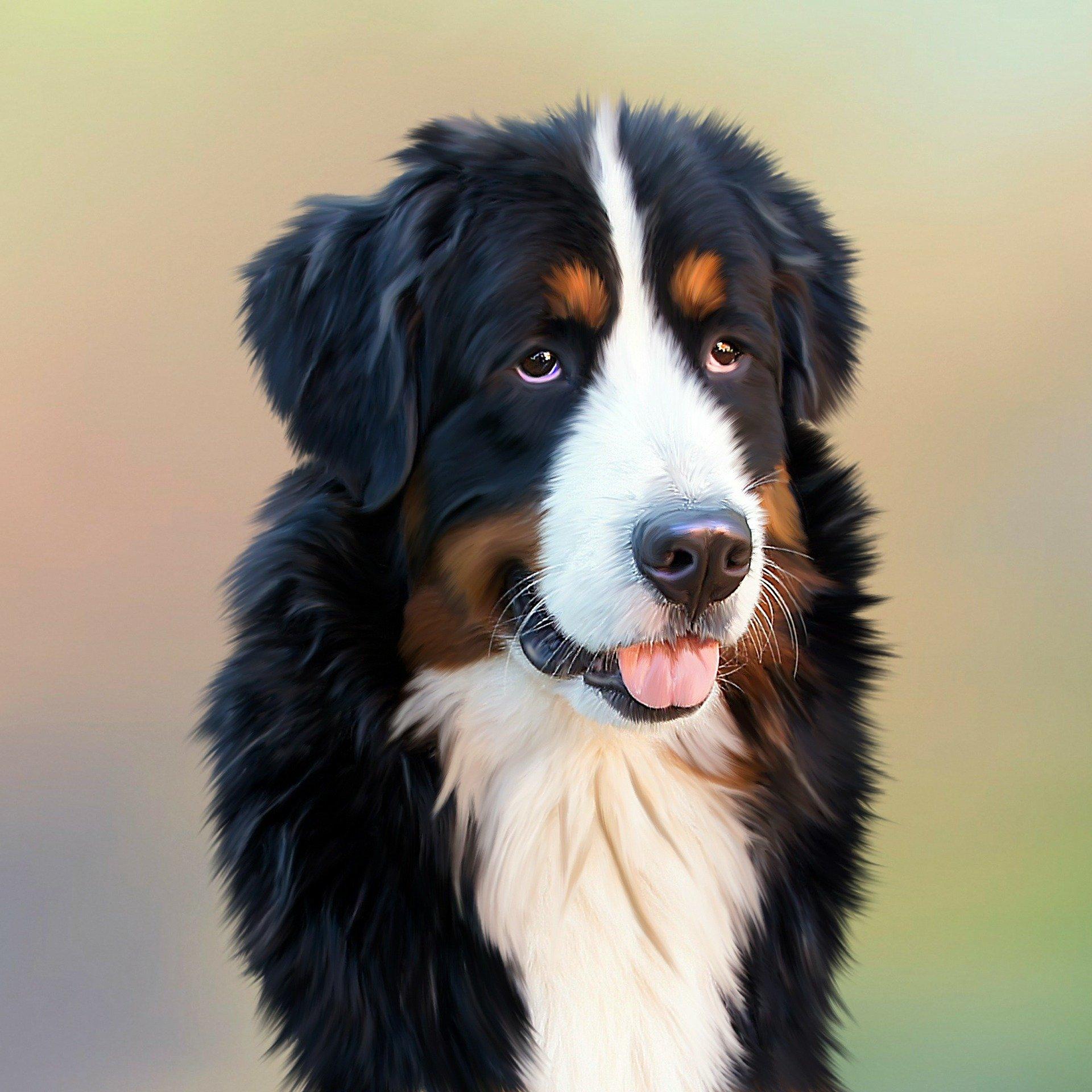 Грыжа диска у собак. Дископатия у собак. Обзорная статья