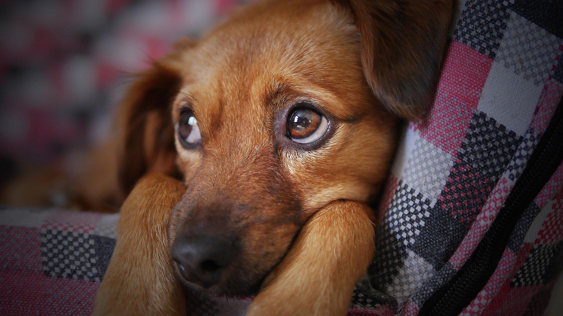 Результаты консервативного лечения грыж диска у собаки (Клинический случай консервативного лечения грыжи диска у собаки, или даже «излечения» грыжи). Консервативное лечение дископатии у собаки. Дископатия у собак