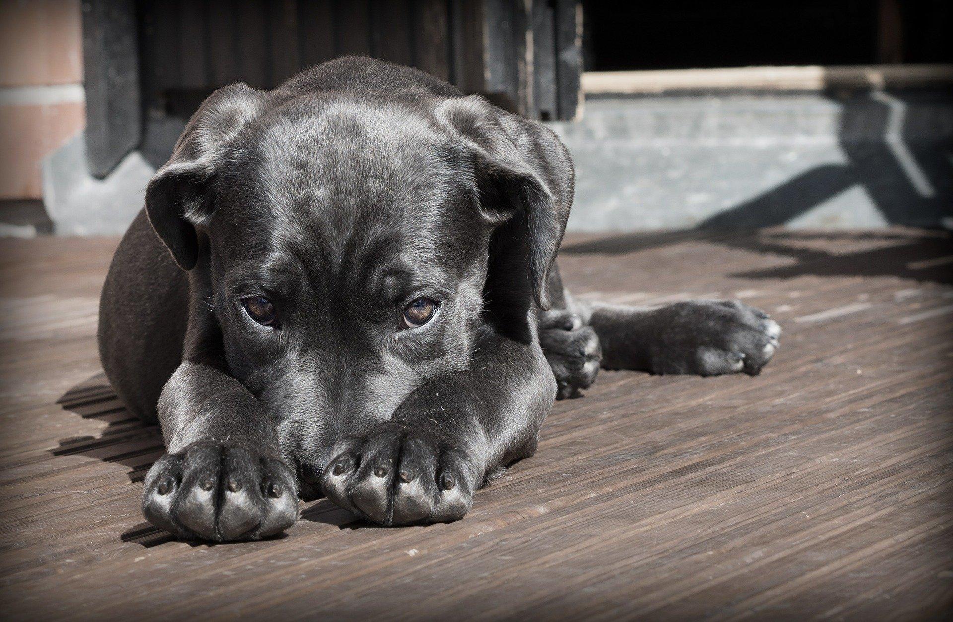 Острые нарушения мозгового кровообращения у собак
