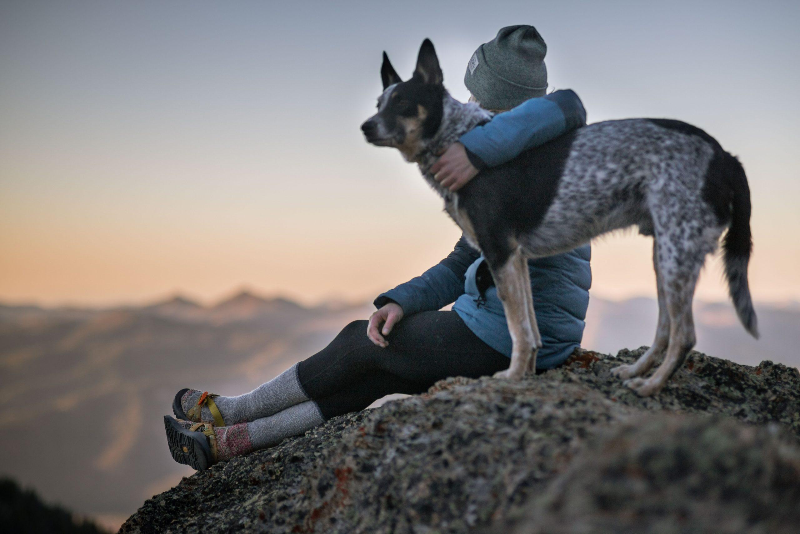 You are currently viewing Посещение ветеринарного невролога с собакой. Профилактика стресса.