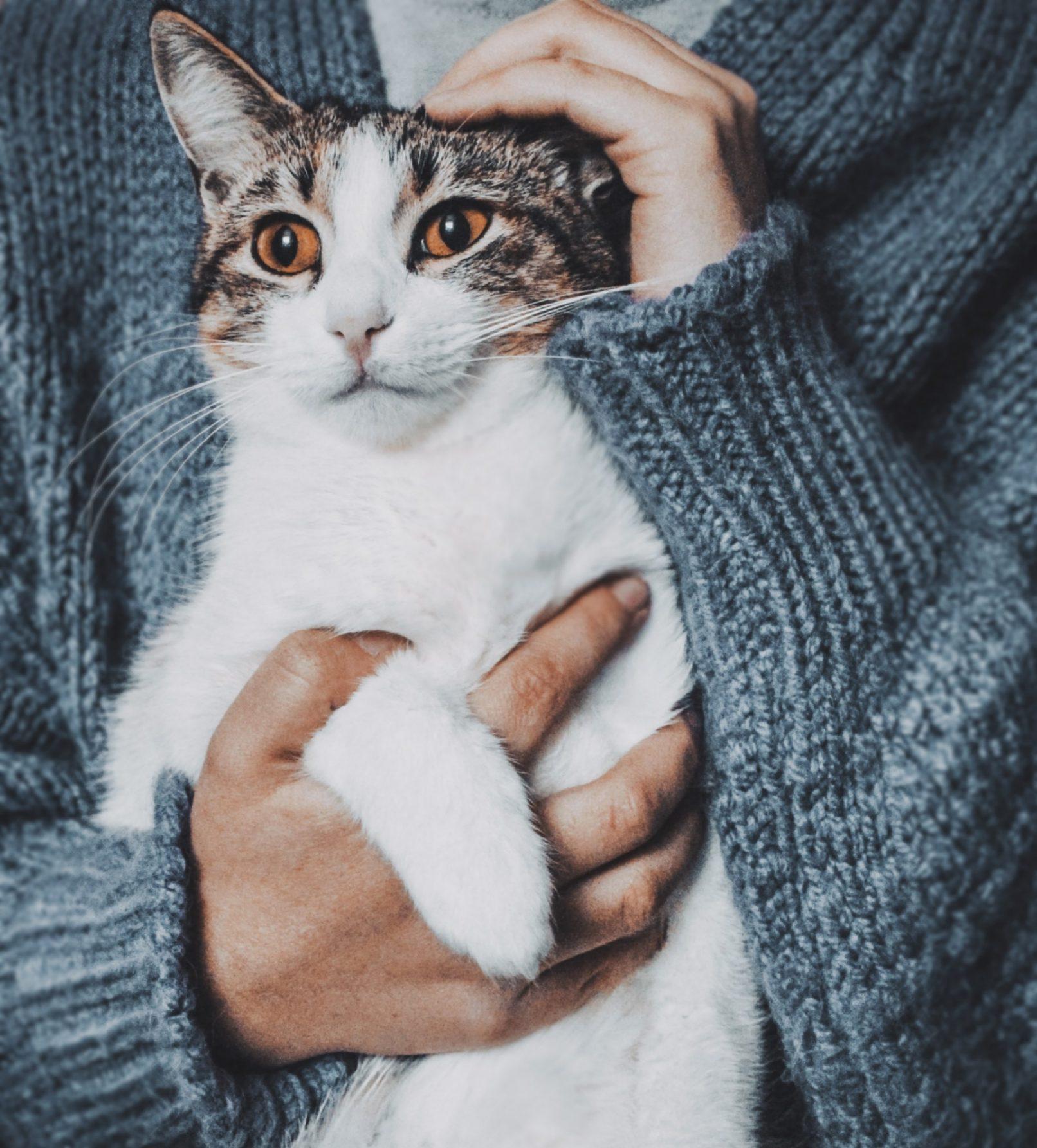 You are currently viewing Посещение ветеринарного невролога с кошкой. Профилактика стресса.